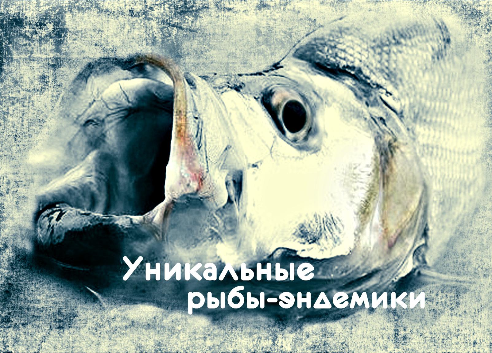Уникальные Рыбы-Эндемики