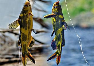 рыболовный тур касатки-скрипуны.jpg
