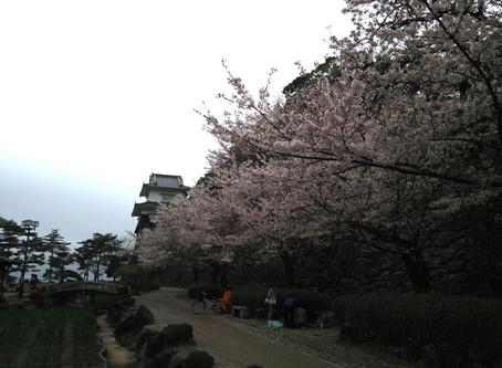 大村城の桜