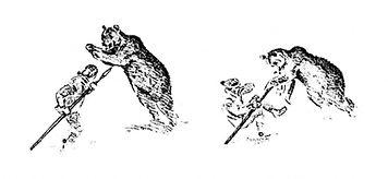 Bear-hunt-11-1024x472.jpg