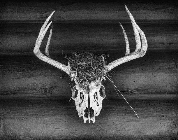 Nest - Deer