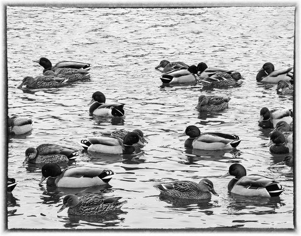 Duck Soup BW.jpg