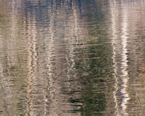 Winter Birch Reflection II