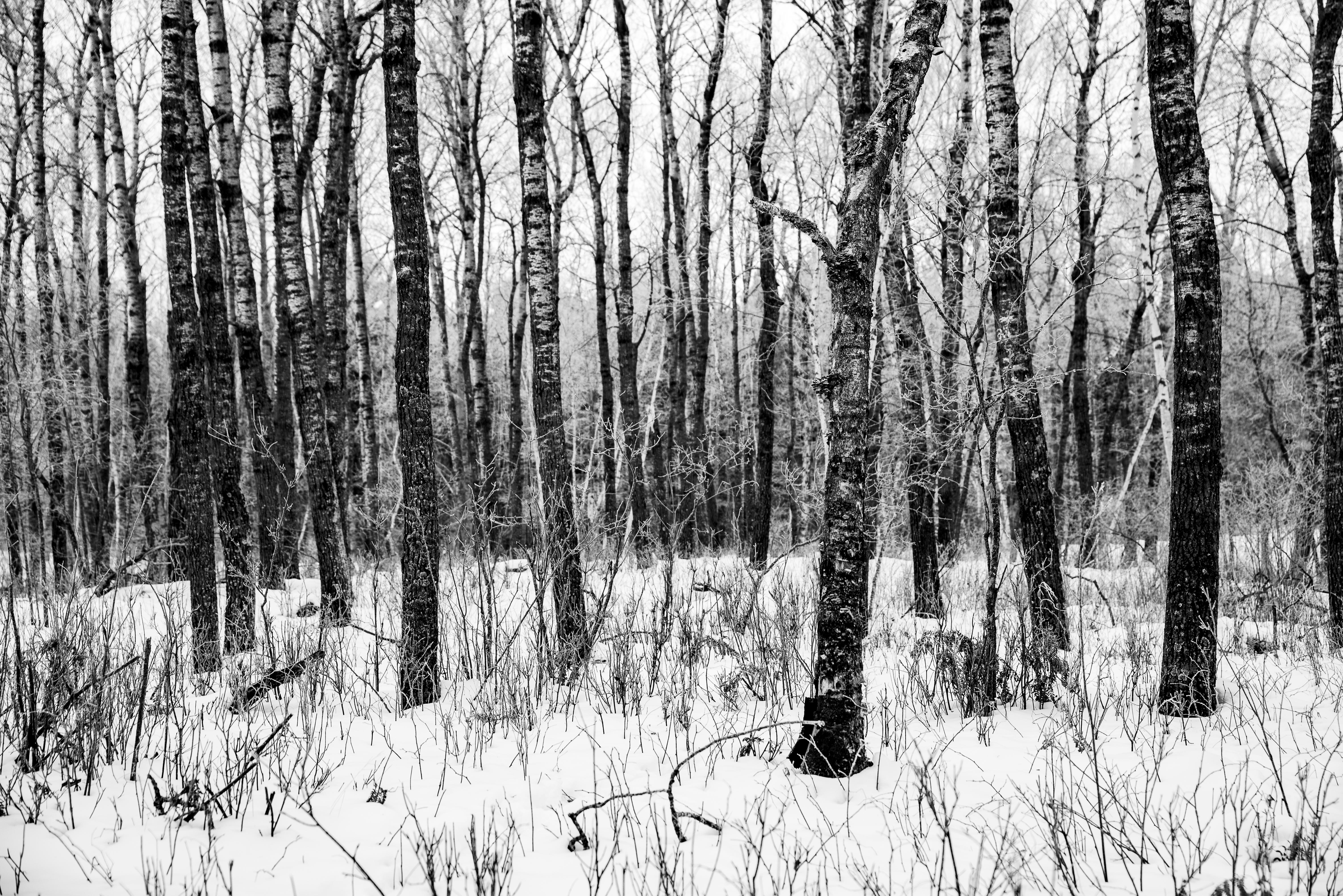 Popple Forest