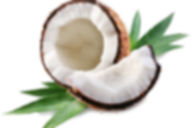 Coconut-Free-Download-PNG.png