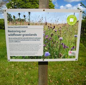 sustainable woodstock 2