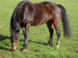 GRAZING HORSE HORNTON GROUNDS.jpg