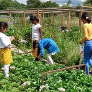 Marston Community Gardening Photos 2019-2021_edited_edited.jpg