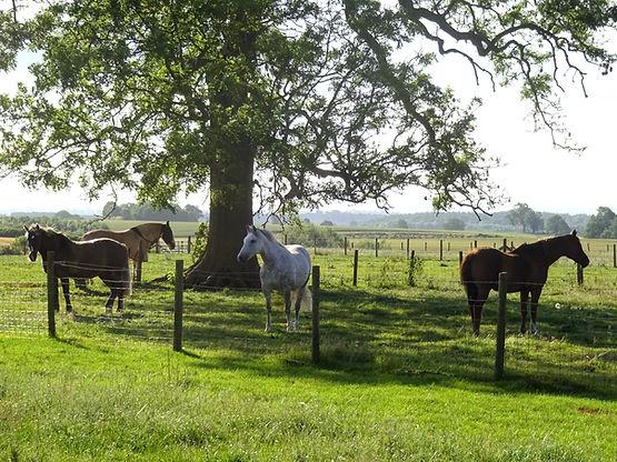 HORSES AT HORNTON GROUNDS.jpg