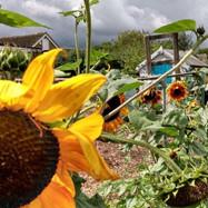 Marston Community Gardening Photos 2019-2021.pptx-2.jpg