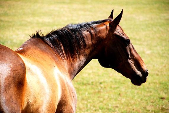 HORSE HORNTON GROUNDS.jpg