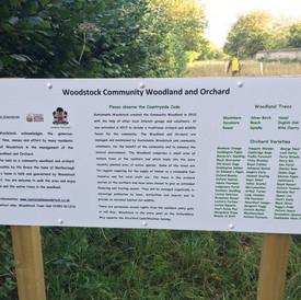 sustainable woodstock 8