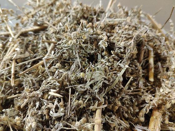 Artemisia Absinthuim GRAND