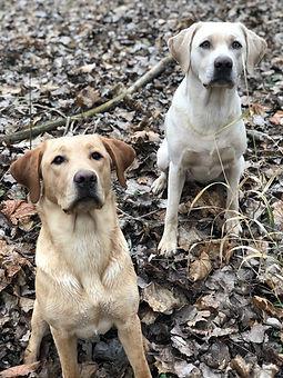 Hunde im Laub.jpg
