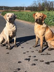 Hunde Spuren.jpg