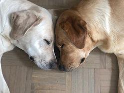 Hunde_Köpfe.jpg