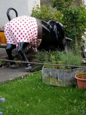 Ceramic black bull faces away from us as he rummages in the garden. He is dressed in table-cloth red and white checked shorts with a hole for his tail.