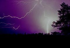 many bolt lightnings on a purple sky above a forest