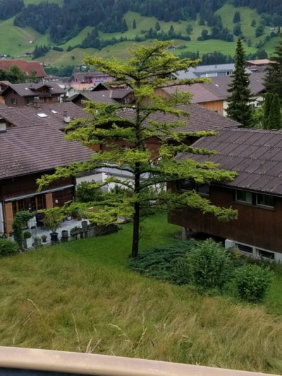 you can see a spruce tree and many town rooves. Beyond are the meadows and forestlands in the foothills of the alps.