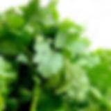 cilantro-1287301_1280.jpg