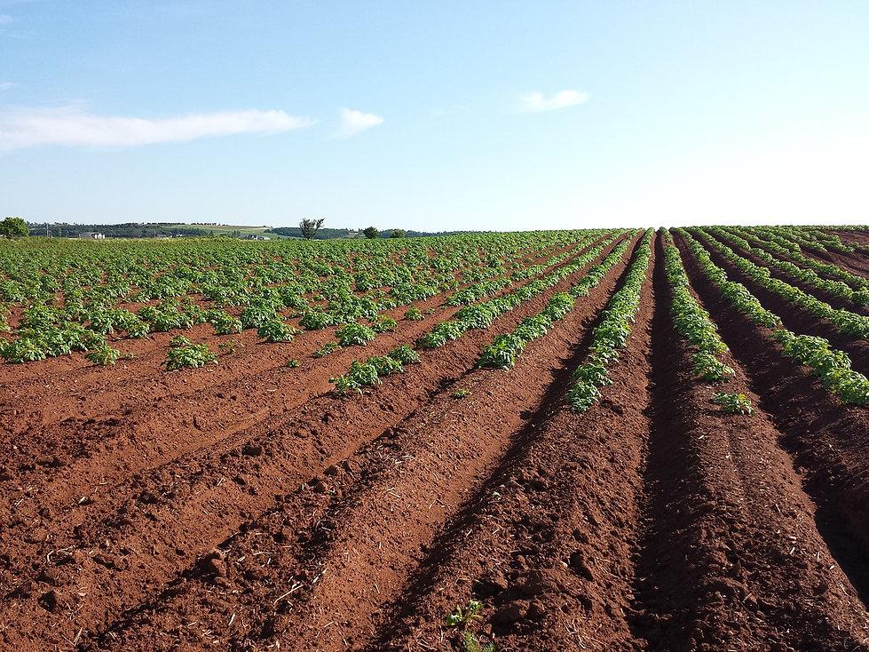 potato-1628500_1280.jpg