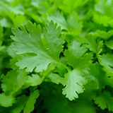parsley-741996_1280.jpg