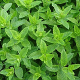 moroccan-mint-2396530_1280.jpg