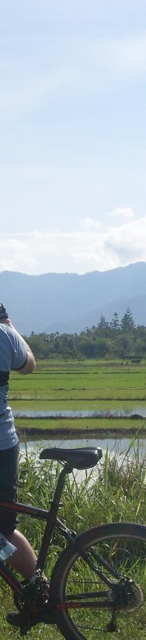 Pitas rice field