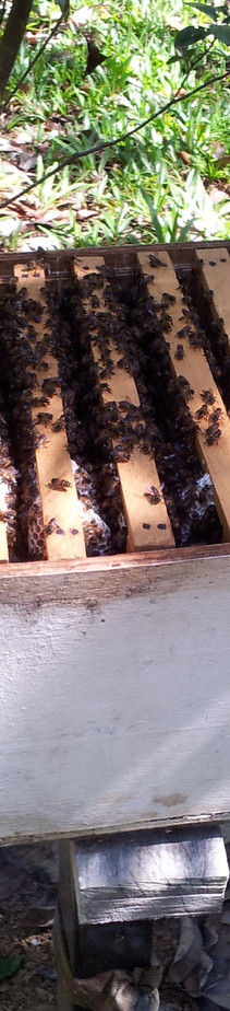 Bee farm, Matunggong