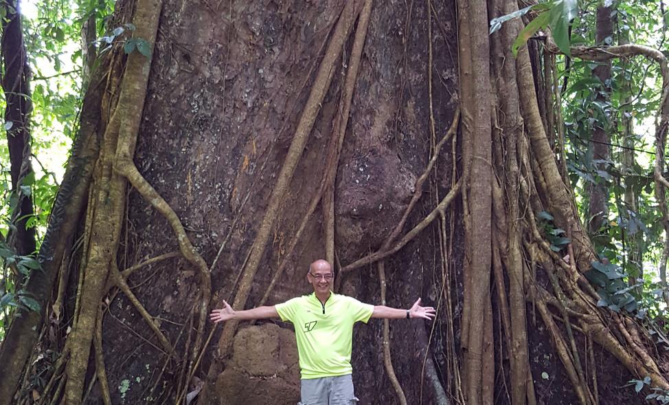 Huge tree, Danum Valley