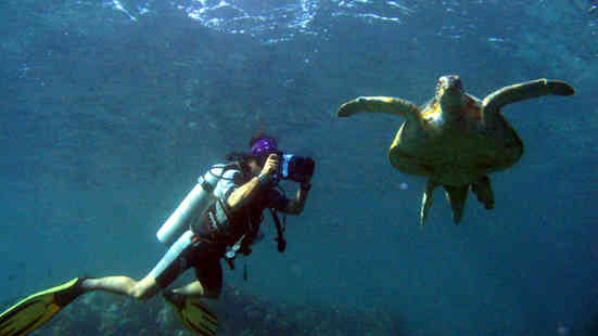 Dive with turtles