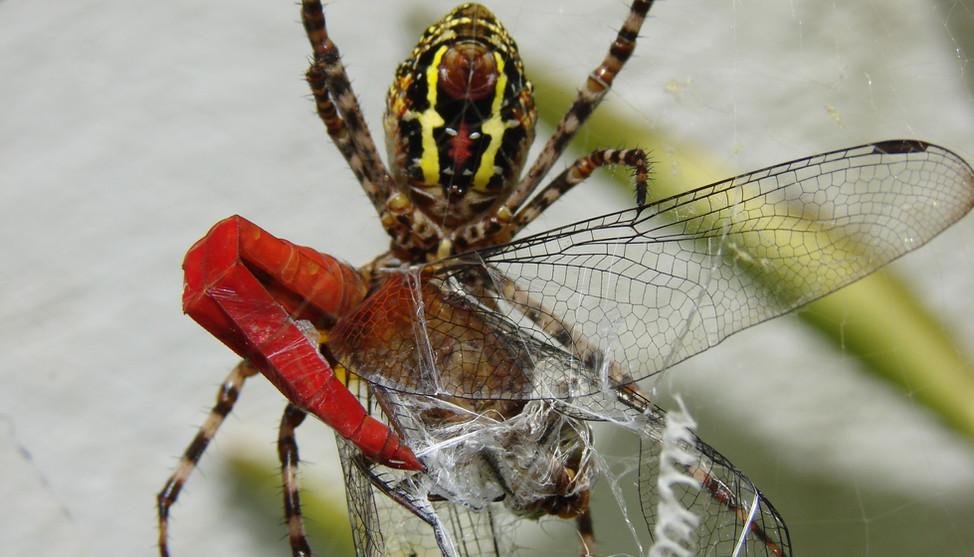 Spider_feeds