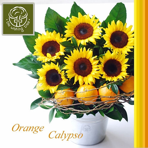 Orange Calypso