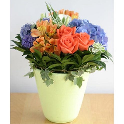 Early Summer Potted Bouquet
