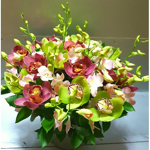 cymbidium Potted Bouquet