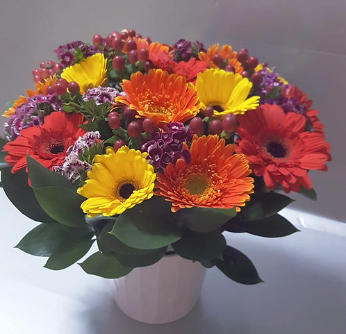 Colorful Gerberas Potted Bouquet