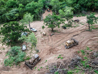 Chicken from UK supermarkets and fast-food chains 'fuelling mass forest loss in South America'
