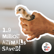 No Meat May saves 1.9 million animal lives in May!