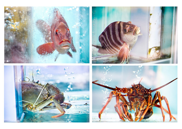 A1 four fish together resize.jpg