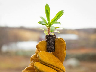 Can we feed 10 billion people on organic farming alone?