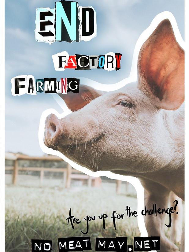 End factory farming!