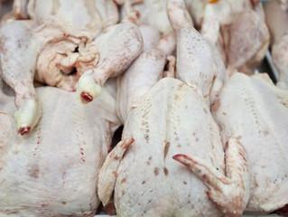 British supermarket chickens show record levels of antibiotic-resistant superbugs