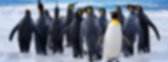 Penguin not joining the crowd, standing out