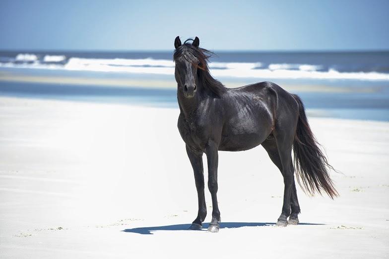 Cumberland's Wild Horses