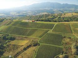 vineyards bolfan