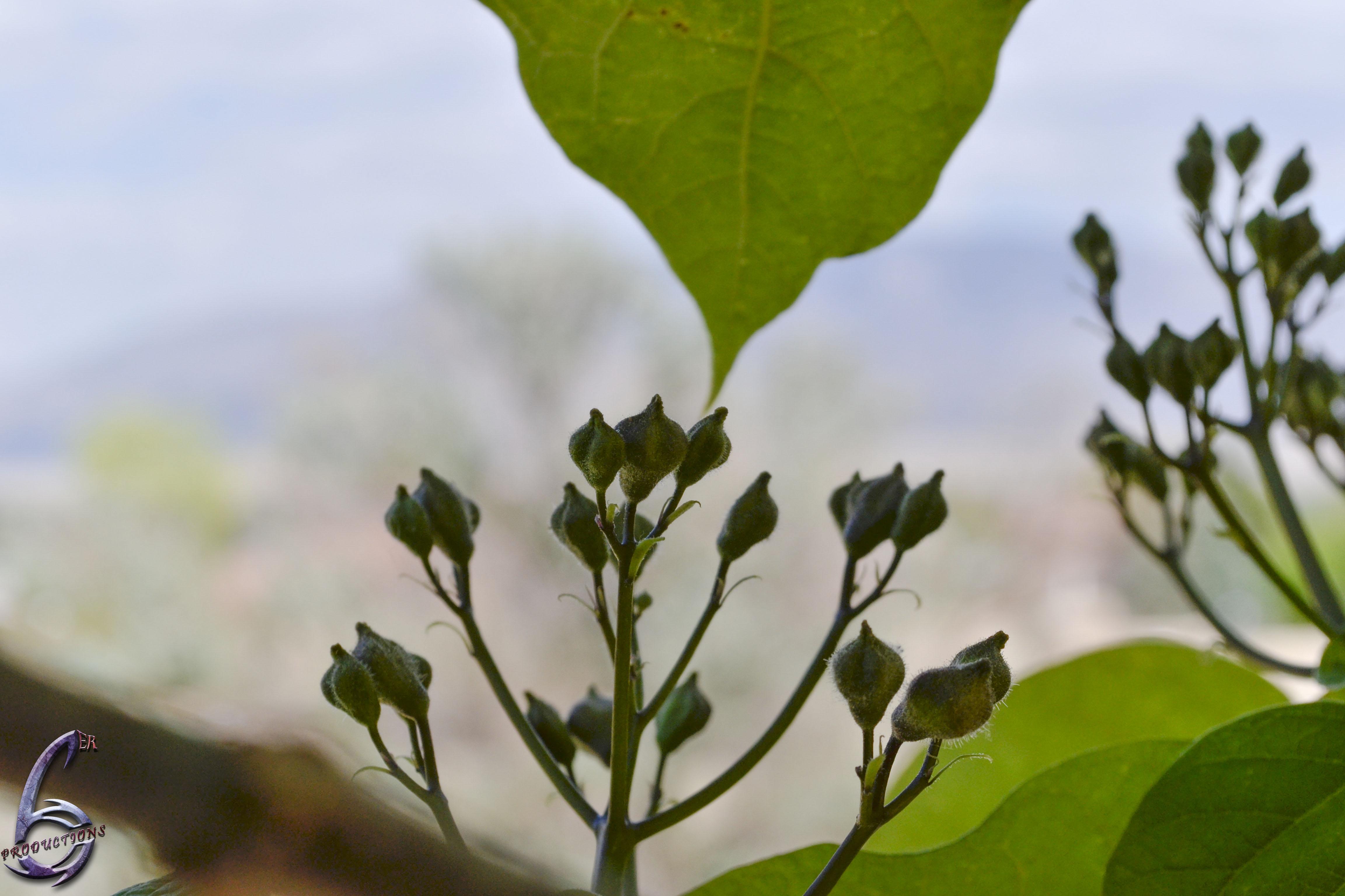 Budding Flower