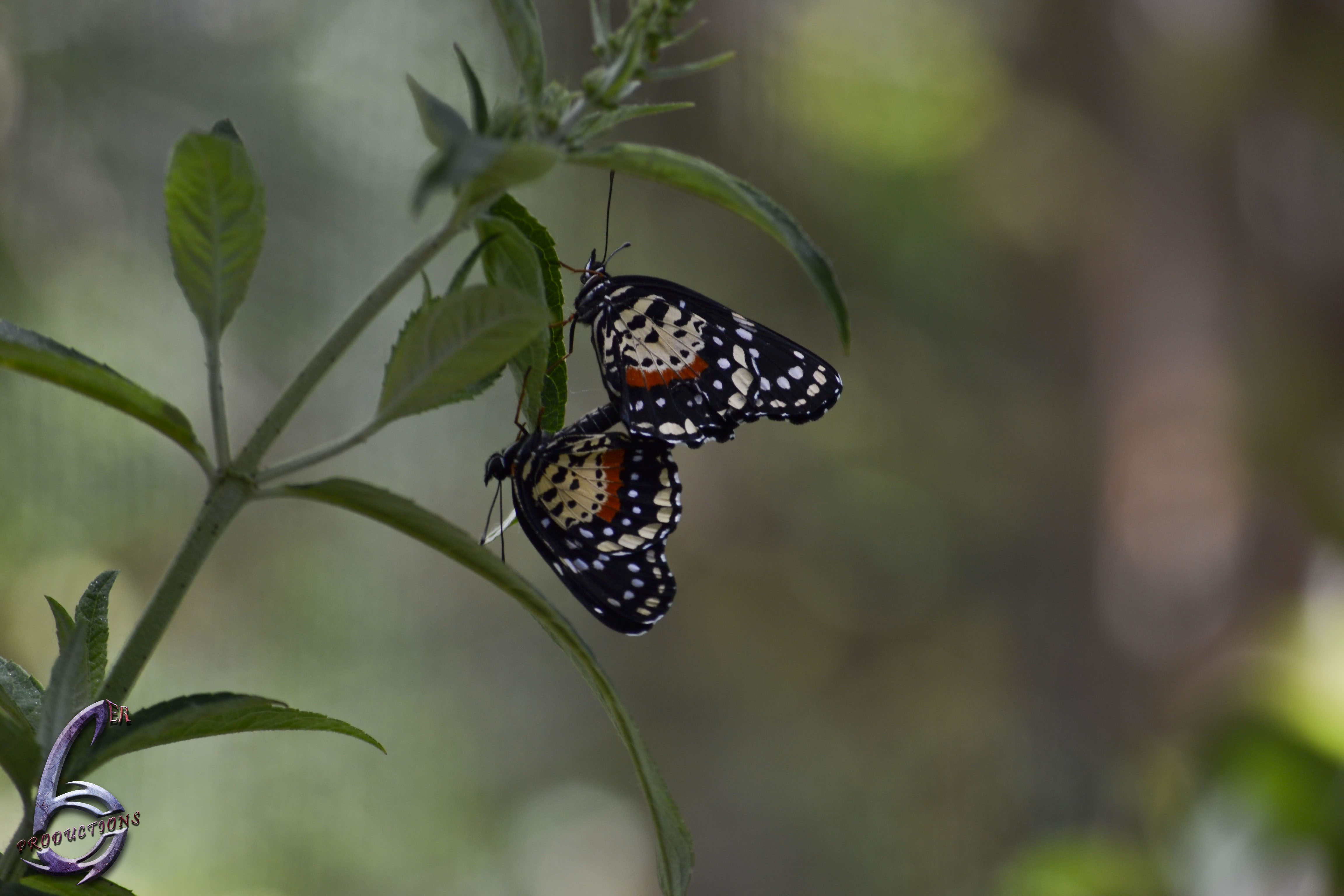 TwoButterflies