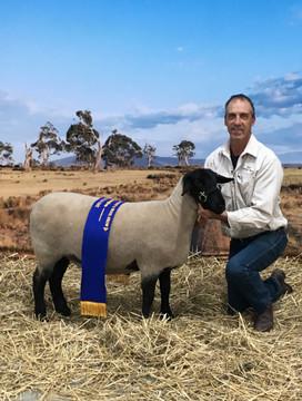 Champion Ewe, Bendigo Sheep & Wool Show 2017