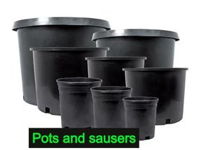 Nursery Pot & Sausers
