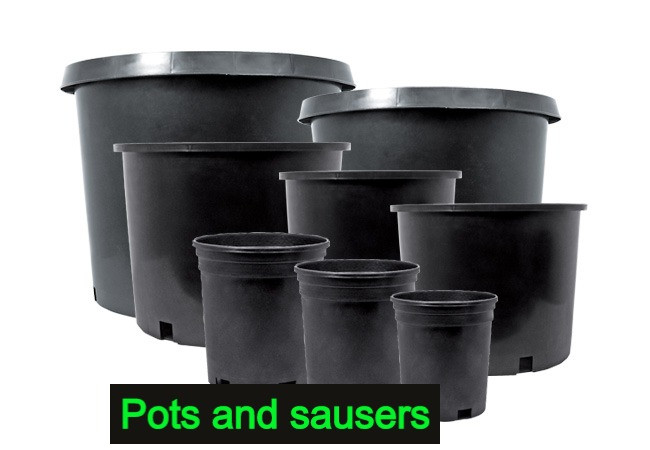 Nursery Pot & Sausers